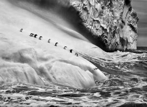 Fonte immagine: ©Sebastiao Salgado/ Amazonas Images.   Isole South Sandwich, 2009