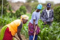 Zimbabwe, Roger Lo Guarro (immagine gentilmente concessa da Cesvi)